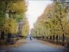Vienna's autumn